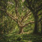 Dekalog #4 – Ludzie jak drzewa